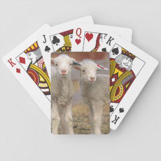 Pares de corderos comerciales de Targhee Cartas De Póquer