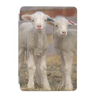 Pares de corderos comerciales de Targhee Cover De iPad Mini