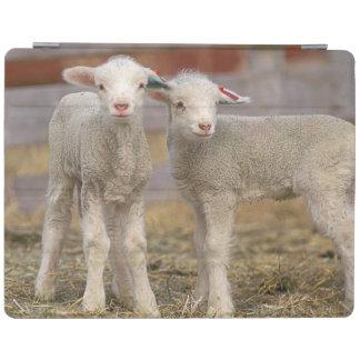 Pares de corderos comerciales de Targhee Cubierta De iPad