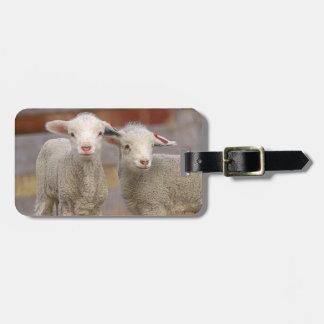 Pares de corderos comerciales de Targhee Etiquetas De Maletas
