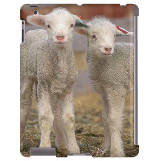 Pares de corderos comerciales de Targhee Funda Para iPad