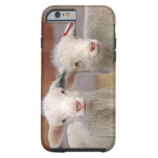Pares de corderos comerciales de Targhee Funda Para iPhone 6 Tough