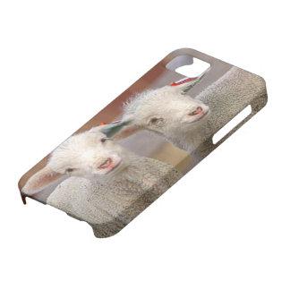 Pares de corderos comerciales de Targhee iPhone 5 Carcasas