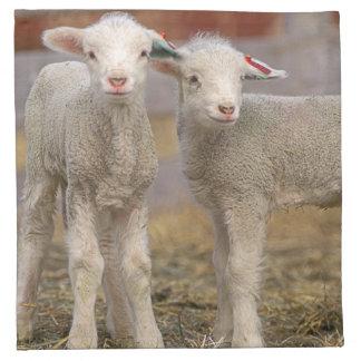 Pares de corderos comerciales de Targhee Servilletas De Papel