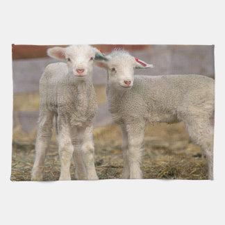 Pares de corderos comerciales de Targhee Toalla De Mano