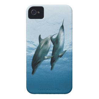 Pares de delfínes carcasa para iPhone 4