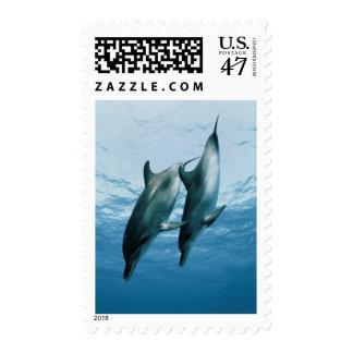 Pares de delfínes estampilla