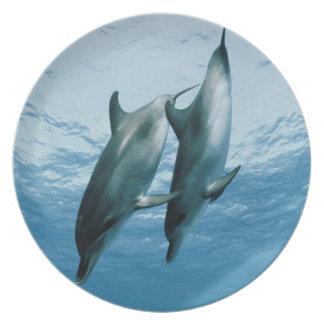 Pares de delfínes platos