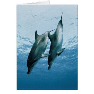 Pares de delfínes tarjeta de felicitación