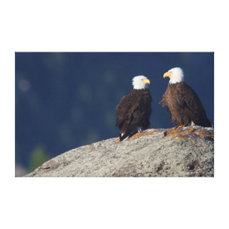 Pares de Eagle calvo Impresiones En Lona