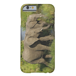 Pares de elefantes africanos que alimentan, Masai Funda De iPhone 6 Barely There