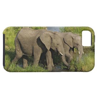 Pares de elefantes africanos que alimentan, Masai  iPhone 5 Cobertura