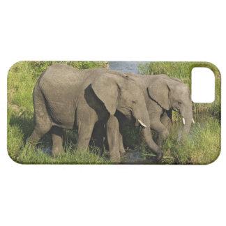 Pares de elefantes africanos que alimentan, Masai  iPhone 5 Protector