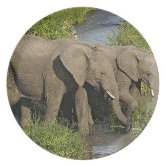 Pares de elefantes africanos que alimentan, Masai  Platos De Comidas