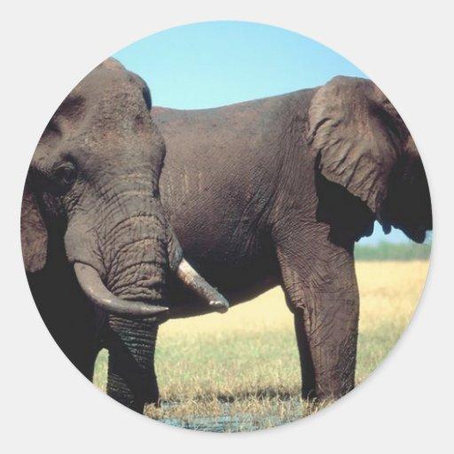 Pares de elefantes pegatina redonda