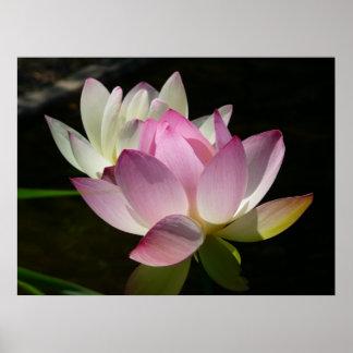 Pares de flores de Lotus II Póster