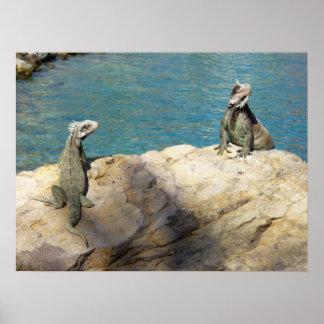 Pares de fotografía animal tropical de las iguanas póster
