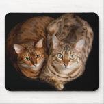 Pares de gatitos de Bengala Alfombrilla De Raton