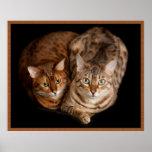 Pares de gatitos de Bengala Impresiones