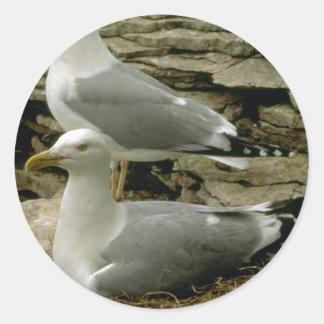Pares de gaviotas de arenques con la jerarquía etiqueta redonda