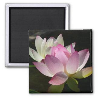 Pares de imán de las flores de Lotus