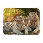 Pares de imán flexible de los tigres blancos