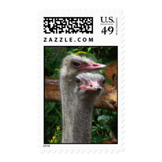 Pares de la avestruz sello