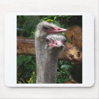 Pares de la avestruz tapete de ratones
