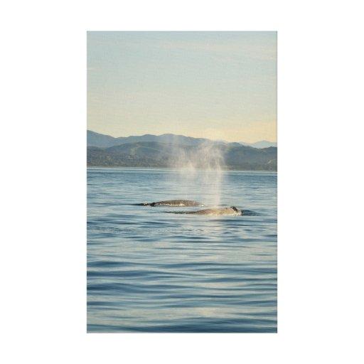 Pares de la ballena impresión en lienzo estirada