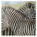 Pares de la cebra de los llanos (quagga del Equus) Azulejo Cuadrado Grande