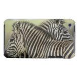 Pares de la cebra de los llanos (quagga del Equus) iPod Touch Case-Mate Cobertura