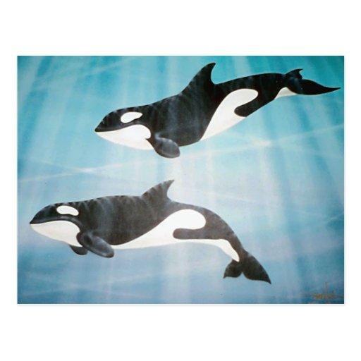 Pares de la orca postales