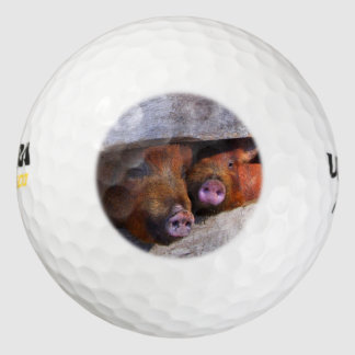 Pares de la pocilga que miran a escondidas Piggies
