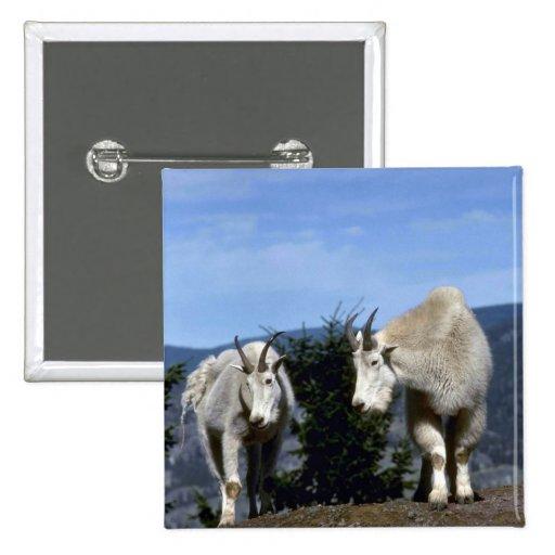 Pares de las cabras de montaña rocosa (niñera en i pin cuadrada 5 cm