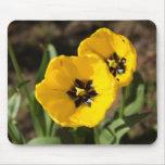 Pares de las flores amarillas brillantes del tulip