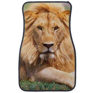 Pares de leones africanos, Panthera leo, Tanzania Alfombrilla De Auto