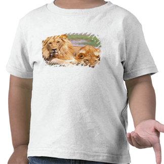 Pares de leones africanos, Panthera leo, Tanzania Camiseta