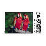 Pares de Macaws rojos Envio