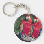 Pares de Macaws rojos Llaveros