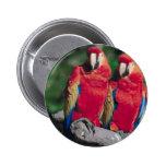 Pares de Macaws rojos Pin