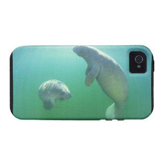 Pares de manatees de la Florida que nadan Vibe iPhone 4 Carcasa