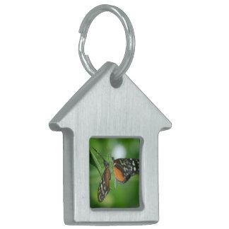 Pares de mariposas placa mascota