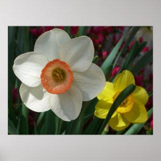 Pares de narcisos rosados y de flores amarillas de póster