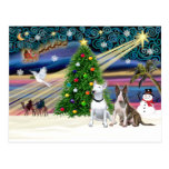 Pares de Navidad Magia-Bull Terrier Postal