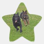 Pares de pastores alemanes pegatinas forma de estrella personalizadas