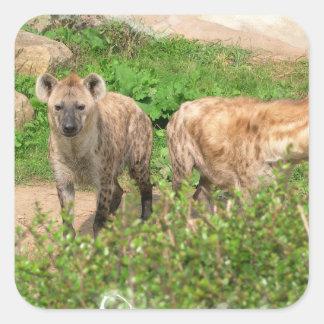 Pares de pegatinas de los Hyenas Calcomanía Cuadradas Personalizadas