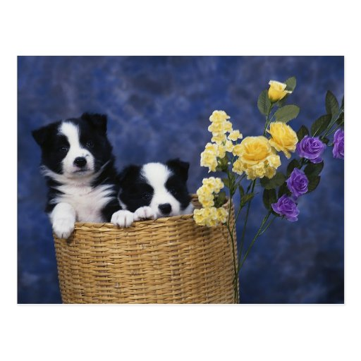 Pares de perritos en una cesta postal