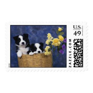 Pares de perritos en una cesta sello