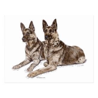 Pares de perros de pastor alemán tarjetas postales