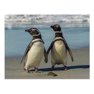Pares de pingüinos en la playa postales